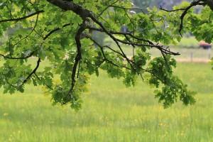 Zurüchschneiden von Bäumen und Sträuchern. (Symbolbild)