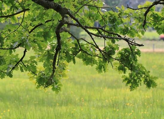 Thusis: Zurückschneiden von Bäumen und Sträuchern an Strassen