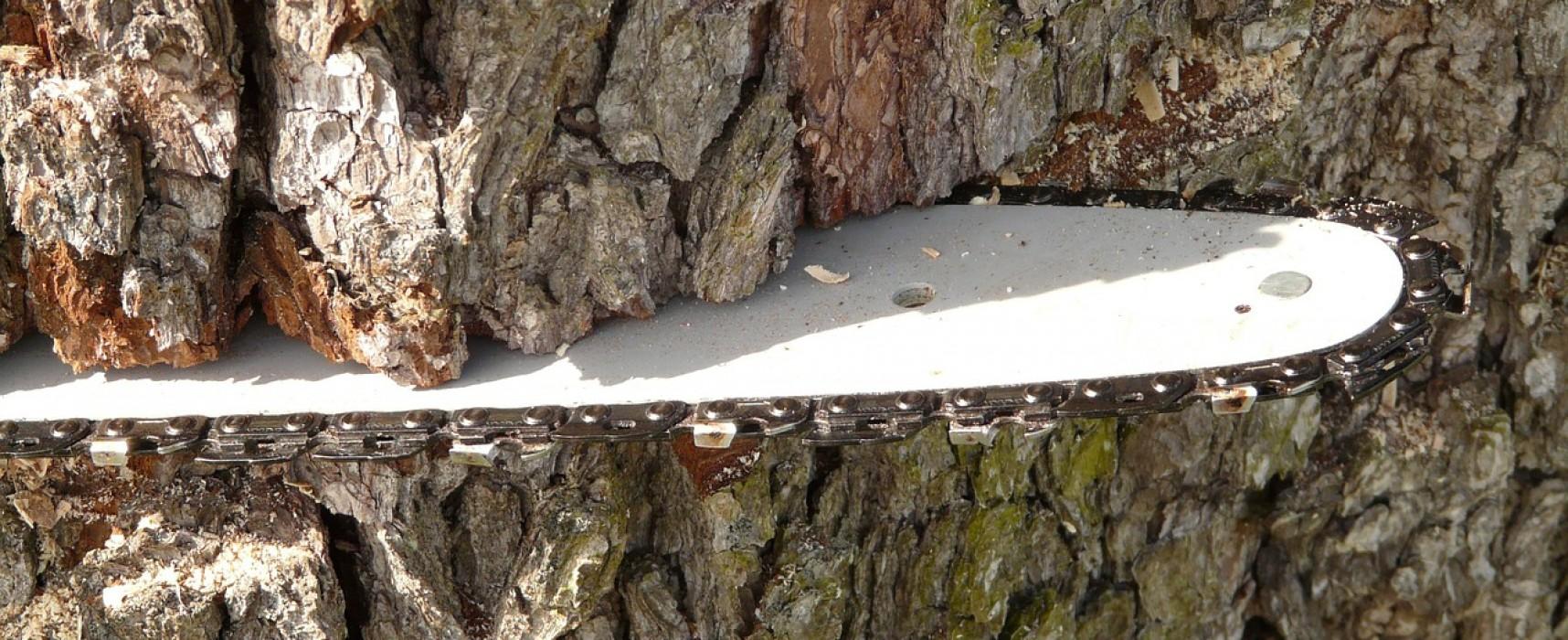 Holzschlag Sessellift im Tgomawald