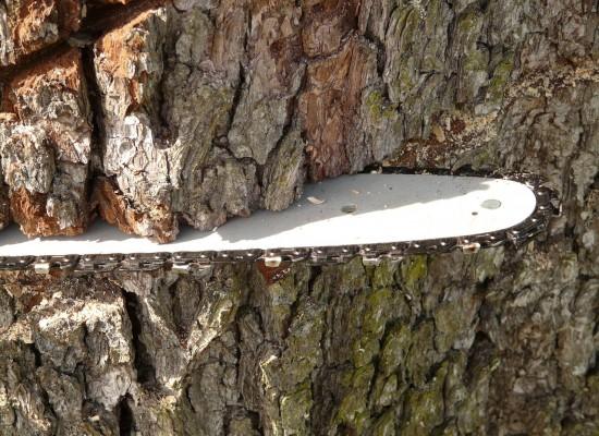 Bonaduz: Forstwartlehrling bei Arbeitsunfall verletzt