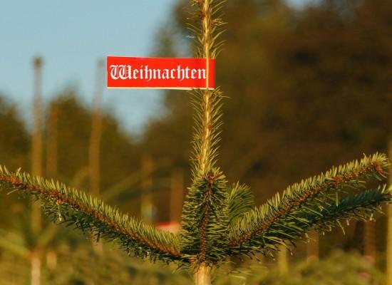 Kaufen Sie sich einen Christbaum für die Familienfeier