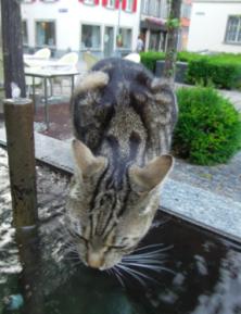 Wasserknappheit in Cazis (Symbolbild Katze an Brunnen in Chur / www.Blaues-Gold.ch)