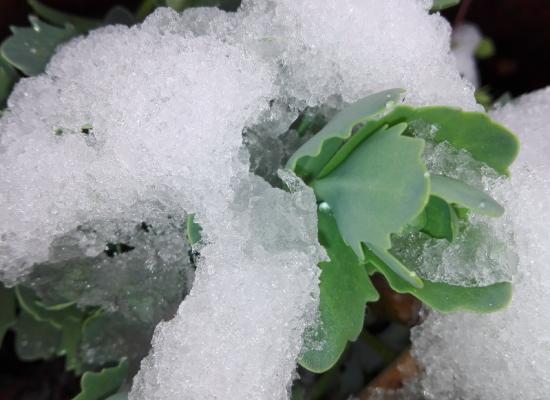 Noch einmal Wintereinbruch im Domleschg