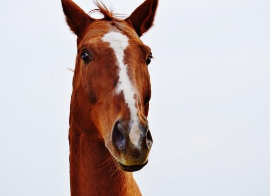 Sils: Pferdehalter aufgepaßt