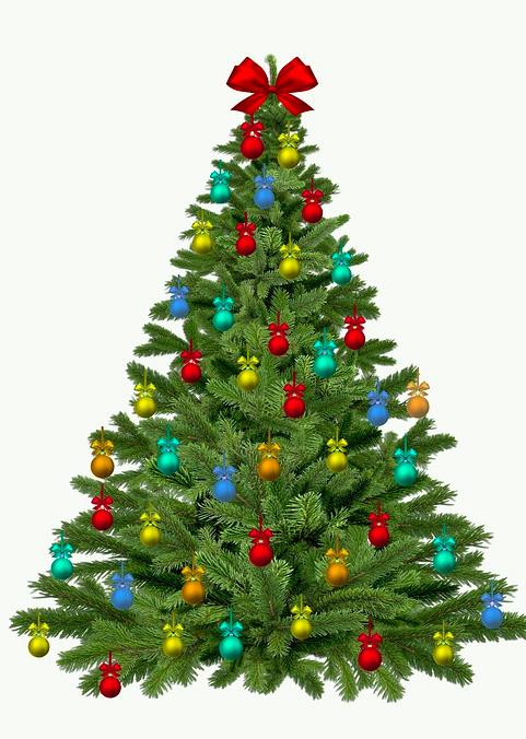 In zahlreichen Gemeinden des Domleschg kann man Christbäume kaufen