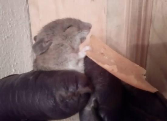 Tierwelt im Domleschg: