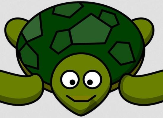 Cazis: Schildkröte gefunden